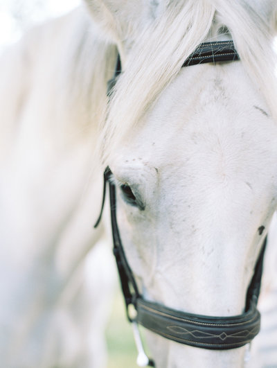 @ 2018 Ashley Nicole Photography - Film Scans Horse