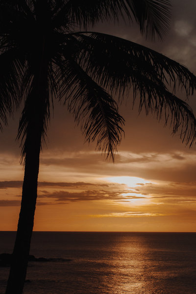 Palm tree and golden Hawaiian sunset over the ocean