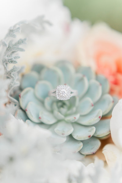 ring shot on succulent