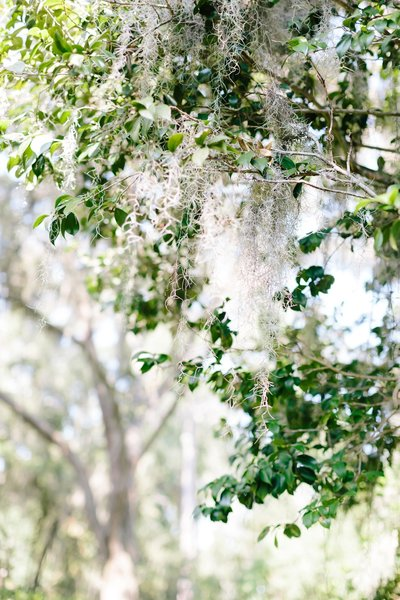 Georgia South Carolina Destination Wedding Photographer_0103