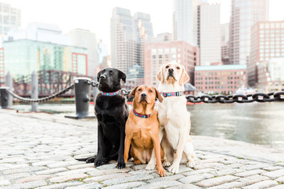 three dogs sitting in Boston Seaport