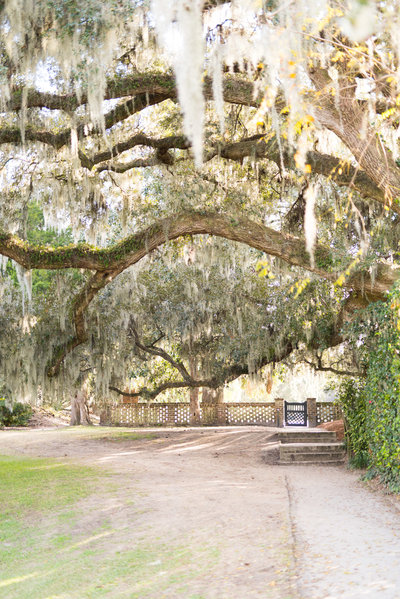 Middleton-Place-Plantation-Live-Okas-Charleston-0081