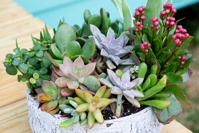 succulent plants in a pot outside by a pool