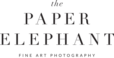 the-paper-elephant-logo-no-elephant