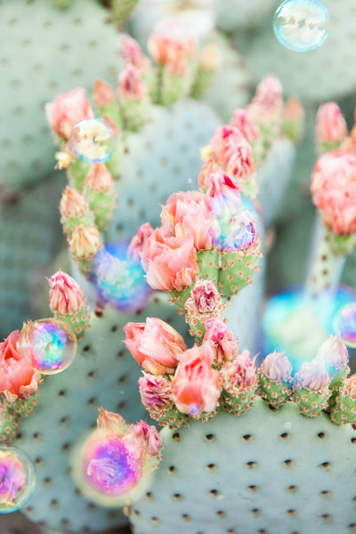 Bunny Ears Prickly Pear Cactus Bubbles