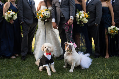 dogs dressed in wedding attire at brides and grooms feet
