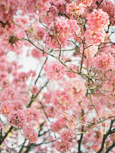 Babsie-Ly-Photography-Almond-Orchards-Cherry-Blossom-Tree-Pink-Film-Wedding-001
