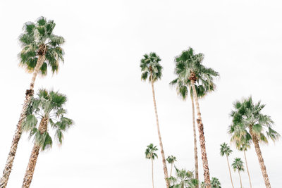 haute-stock-photography-palm-springs-collection-final-9