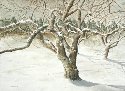 Cherry Winter, 21 X 29 inches, Alan Shuptrine