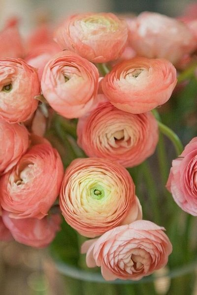 be8db5f3c54c7d32ea9de22a6b464571--wedding-flowers-ranunculus-orange-ranunculus