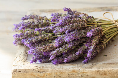 bunch-of-lavender-flowers-PKVBYKK