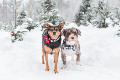 Two dogs in a snowy field