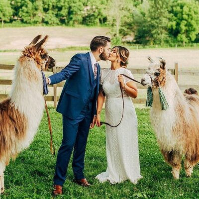 bride and groom make goofy faces with alpacas at durham hill farm for their wedding shot by wedding photographer in philadelphia alex medvick