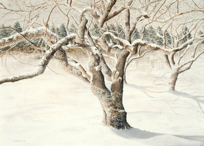 Cherry Winter © Alan Shuptrine, 21X29 inches