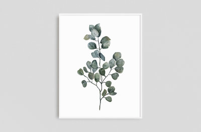 Watercolor Prints - Framed x 1 - Eucalyptus