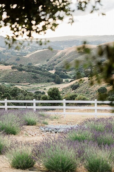 Carmel Monterey Big Sur Couples Photo Lavender by Tee Lambert Photography4