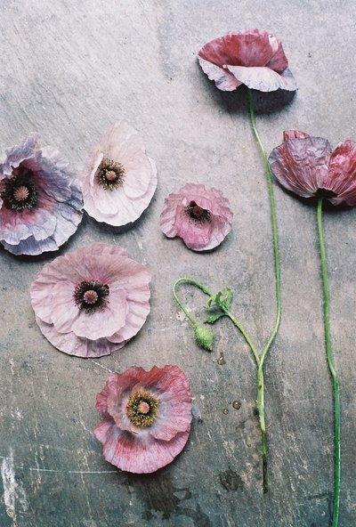 Poppies laying on a slate tile