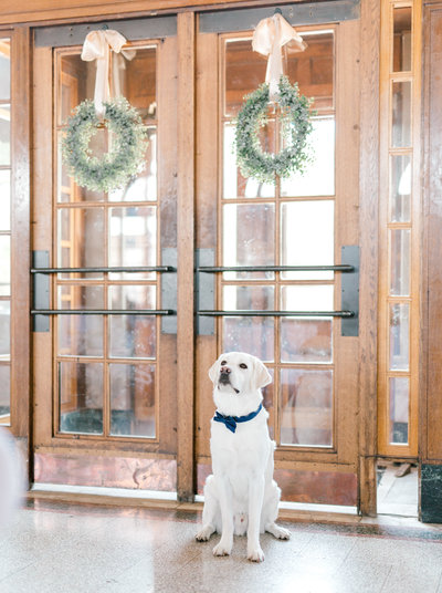 Lab Dog  is a ring bearer at a wedding in Perry, Ia.