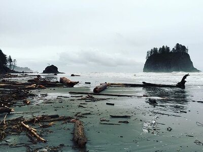 la-push-beach-in-the-olympic-national-forest-washington_t20_2JnObV