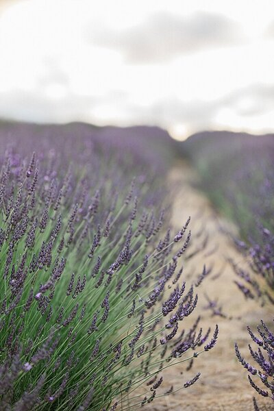 Carmel Monterey Big Sur Couples Photo Lavender by Tee Lambert Photography5