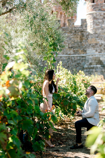 proposal in the vineyard at Castello di Amorosa Winery in Calistoga
