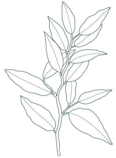 leaf-illustrationv1 green