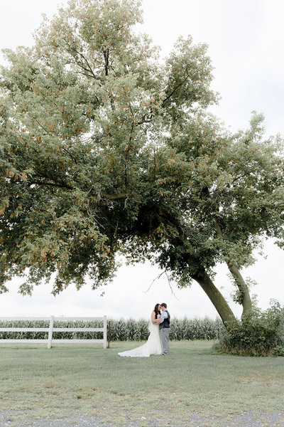 Bride and Groom under an oak tree with a cornfield background at Ridegtop in Prescott Wisconsin