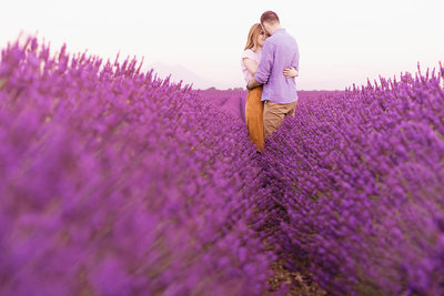 lavender fields photography in Provence, France.