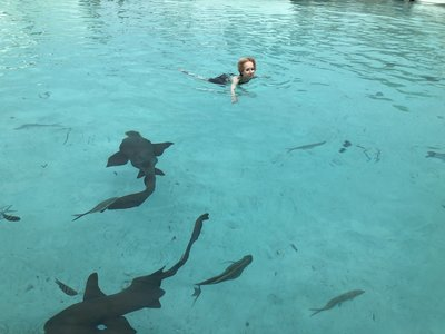 Swimming WithSharks