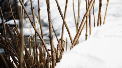 Flower photography book image twigs standing in snow