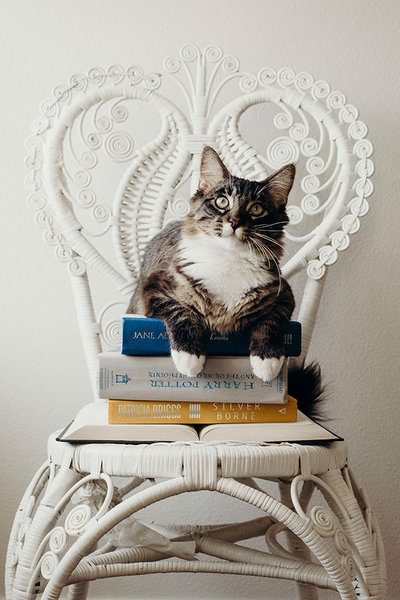 cat sitting on stack of books