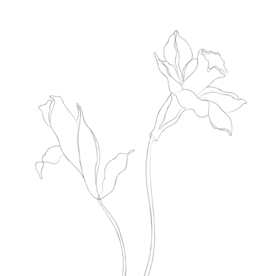 minimalist botanical line sketches - galerie design studio-04