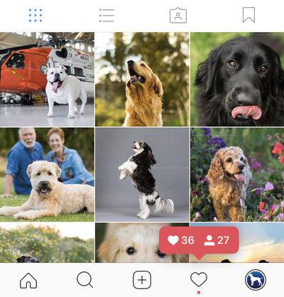 pet instagram photos