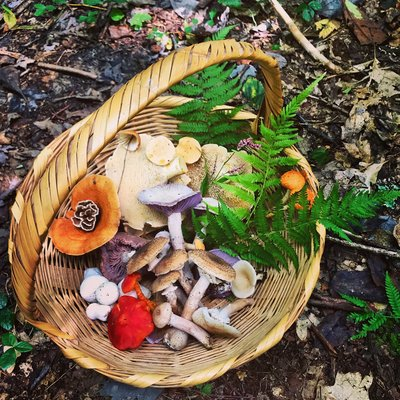 There are so many opportunities to forage  for plants and mushrooms in the New River Gorge.
