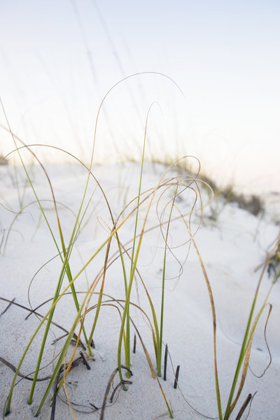 beachgrass2