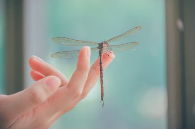 Canva - Close-Up Photography of Dragonfly Perched on a Finger