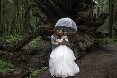 Redway-California-wedding-photographer-Parky's-Pics-Photography-Humboldt-County-Photographer-Avenue-of-the-Giants-First-look-in-the-redwoods-wedding-6.jpg