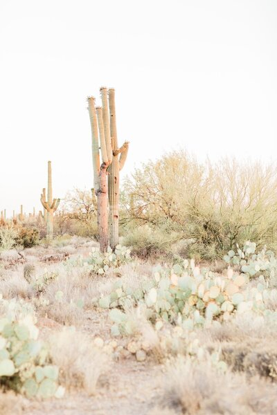 Photo of cactus varieties in Arizona