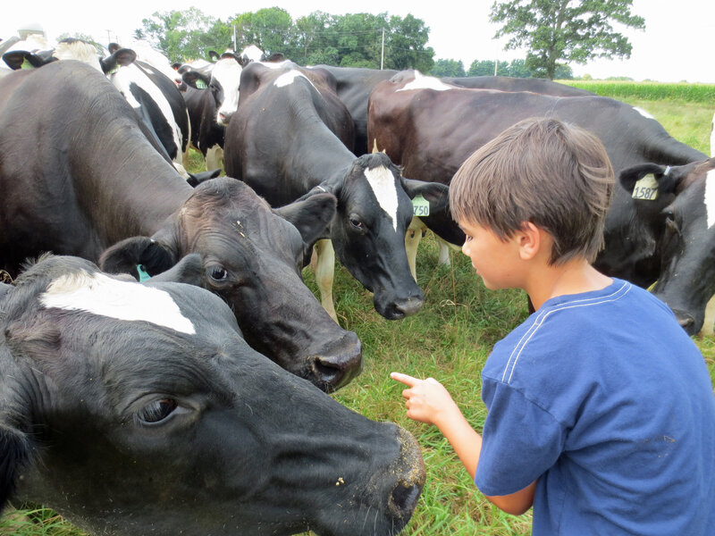 auggiekoepkewithcows