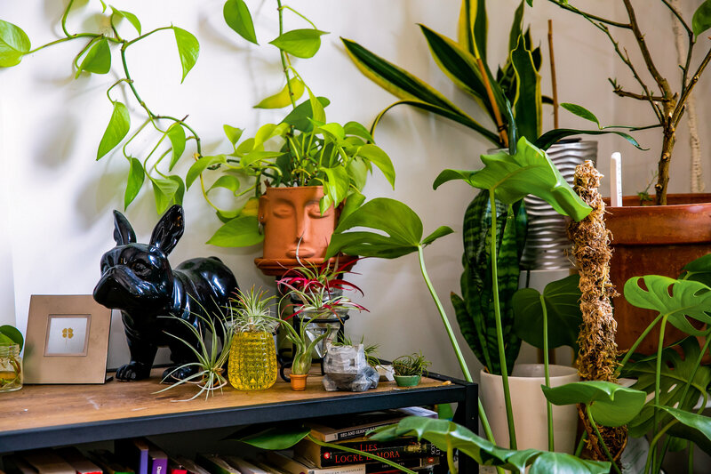 plants sitting on credenza in corner of apartment