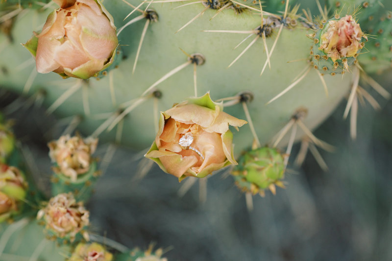 wedding ring on cactus