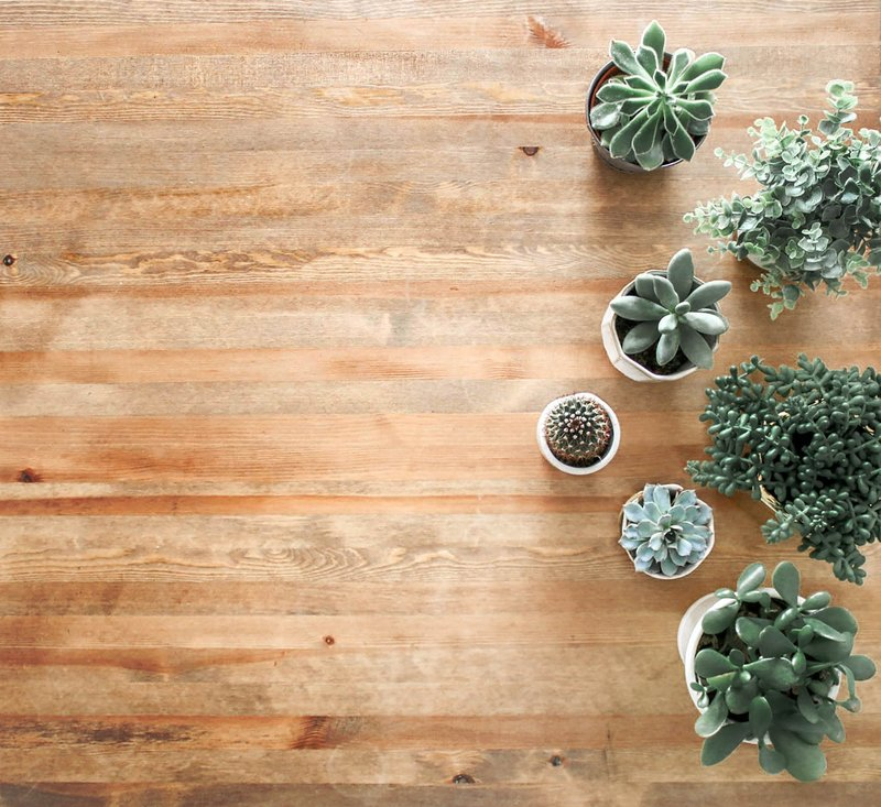 above-ground-photo-of-succulent-plants-on-brown-wooden-board-1470168