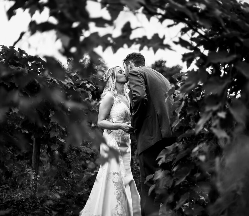 Bride and groom seen kissing behind the vines at Quincy Cellars