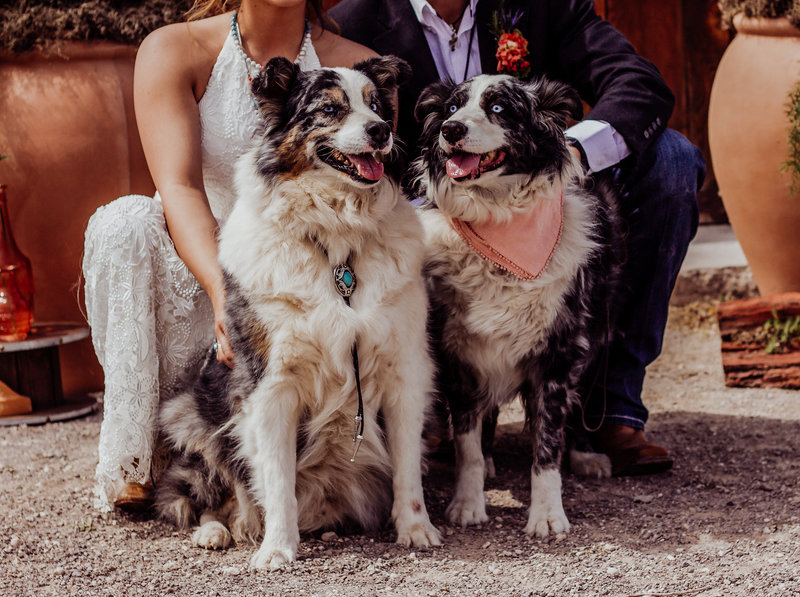 happy Family - Bride and Groom with their dogs