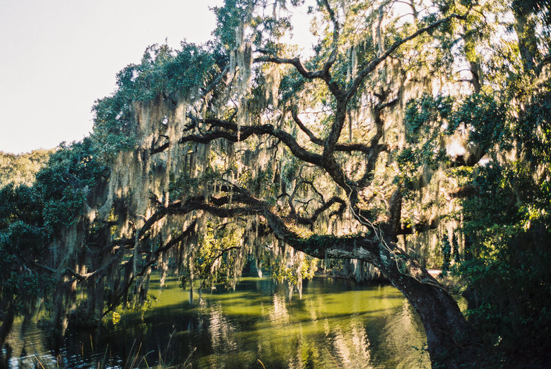 legare-waring-house-charleston-wedding-photographers-philip-casey-photo-114