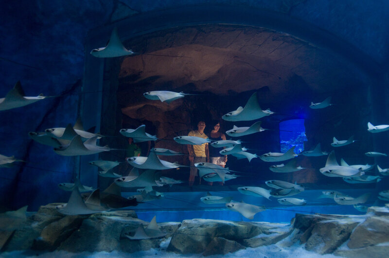 Immersed in the World of the Ray at SeaWorld Orlandos Manta