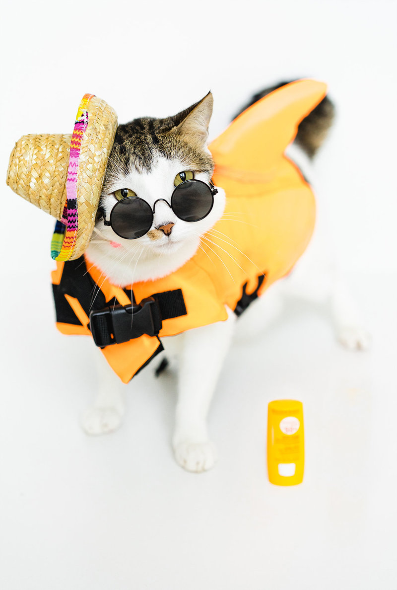 cat-costume-life jacket- mexican hat- funny animals