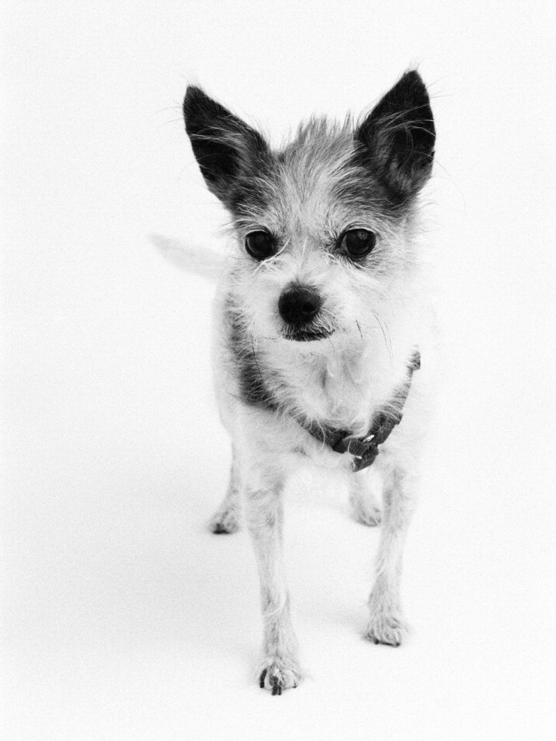 pet photographer in nyc