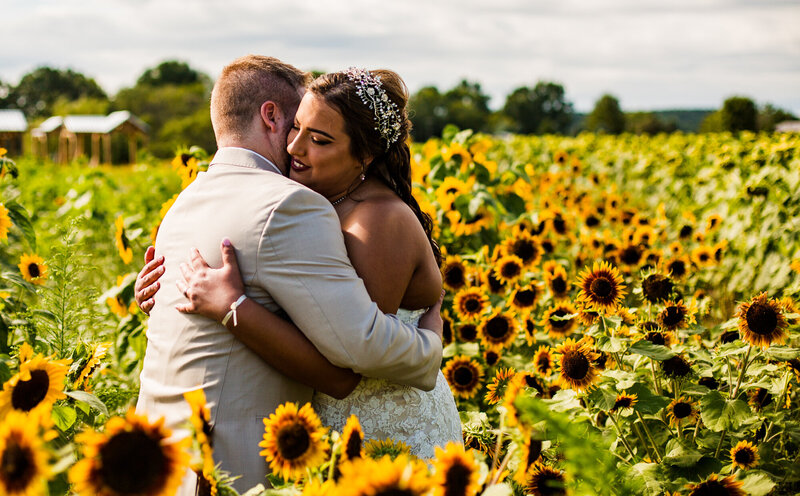 Bride and groom embrace in a fiels of sunflowers at Port Farms