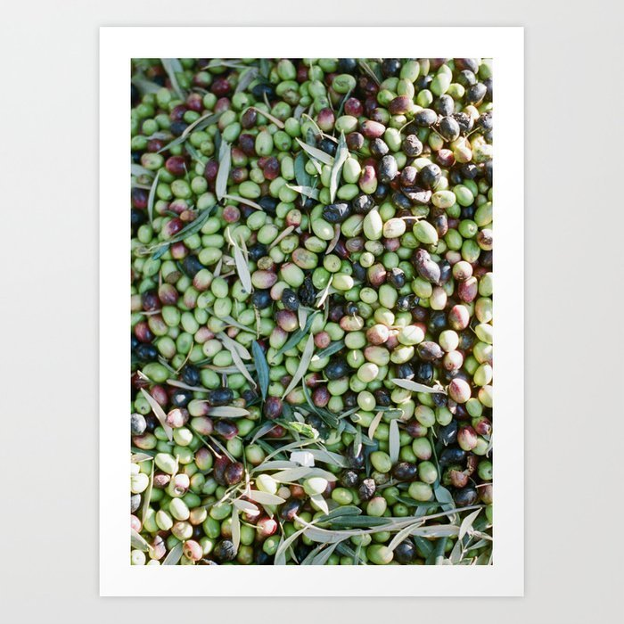 travel-photography-mixed-olives-shot-in-morocco-botanical-prints